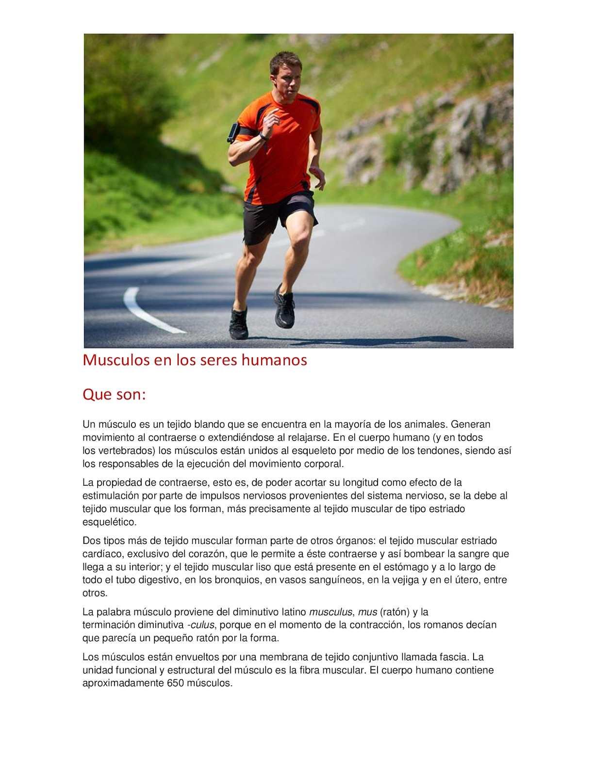 Calaméo - Musculos En Los Seres Humanos