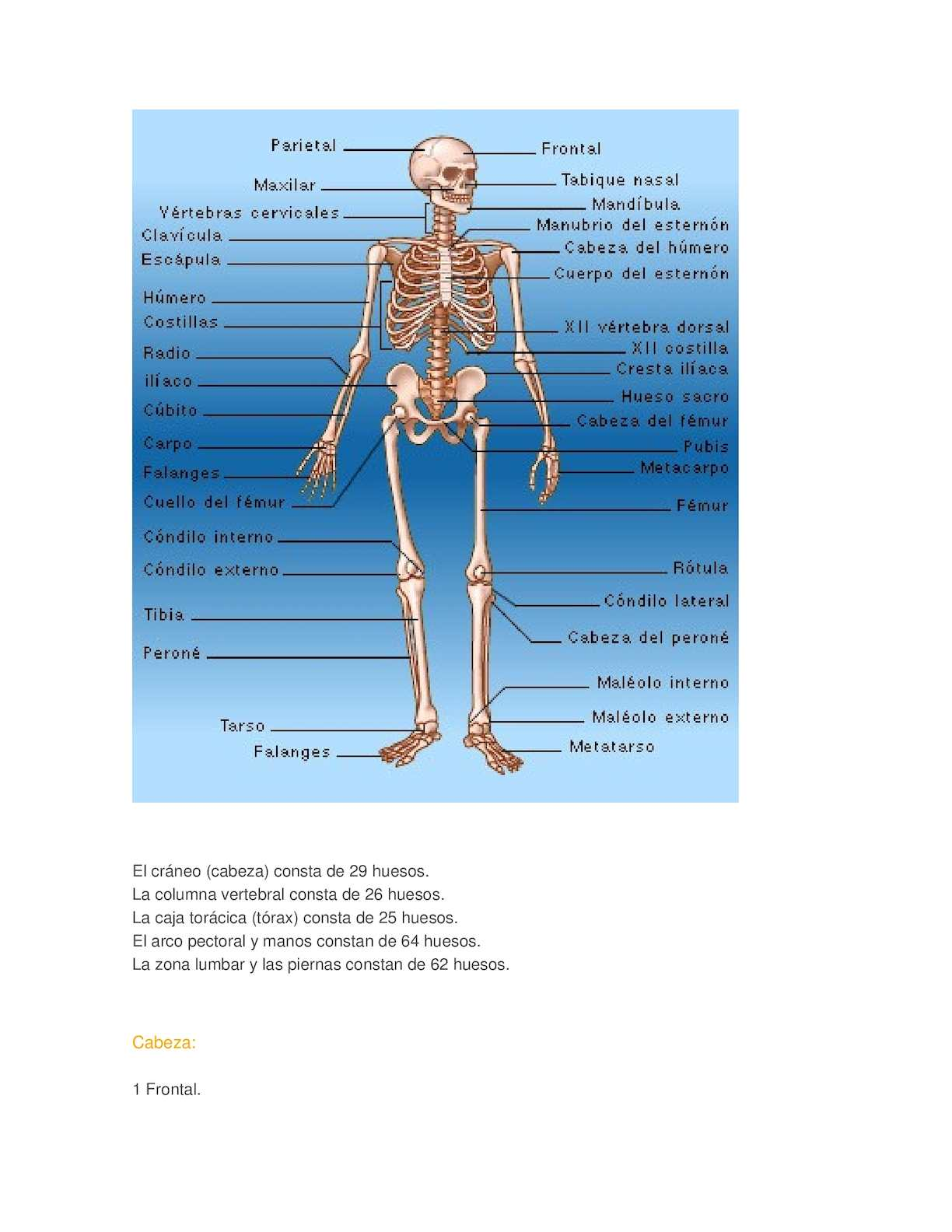 Moderno Dork Anatomía Ballena Ideas - Imágenes de Anatomía Humana ...