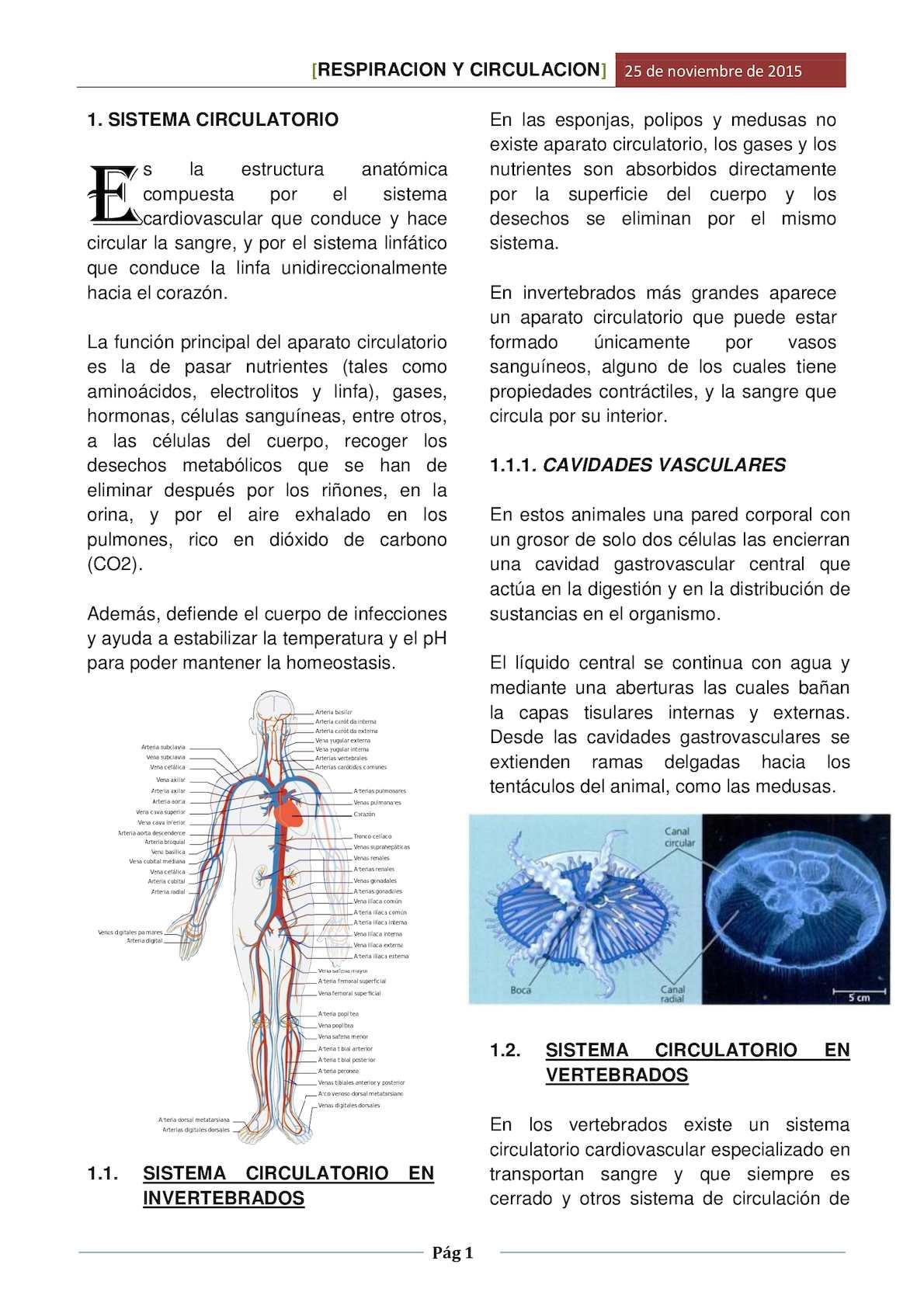 Calaméo - Respiracion Y Circulacion