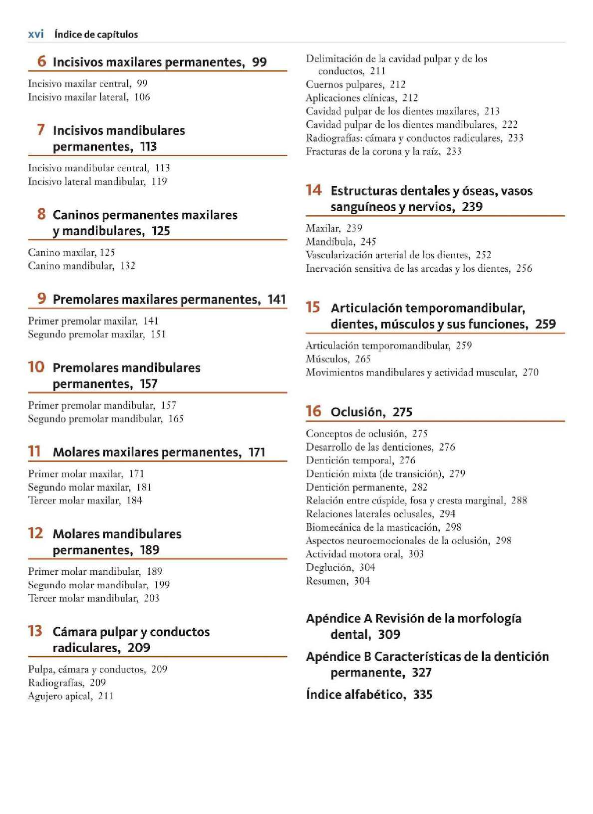 Lujoso Tercero Anatomía Molar Maxilar Adorno - Anatomía de Las ...