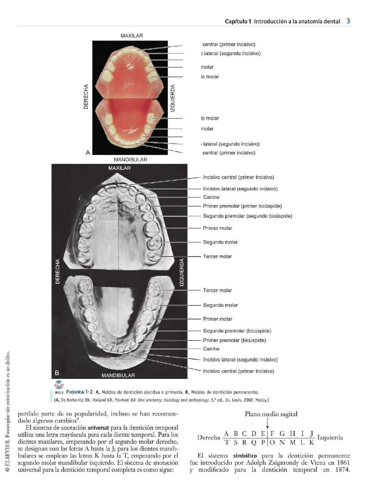 Encantador Anatomía Mucosa Oral Embellecimiento - Imágenes de ...
