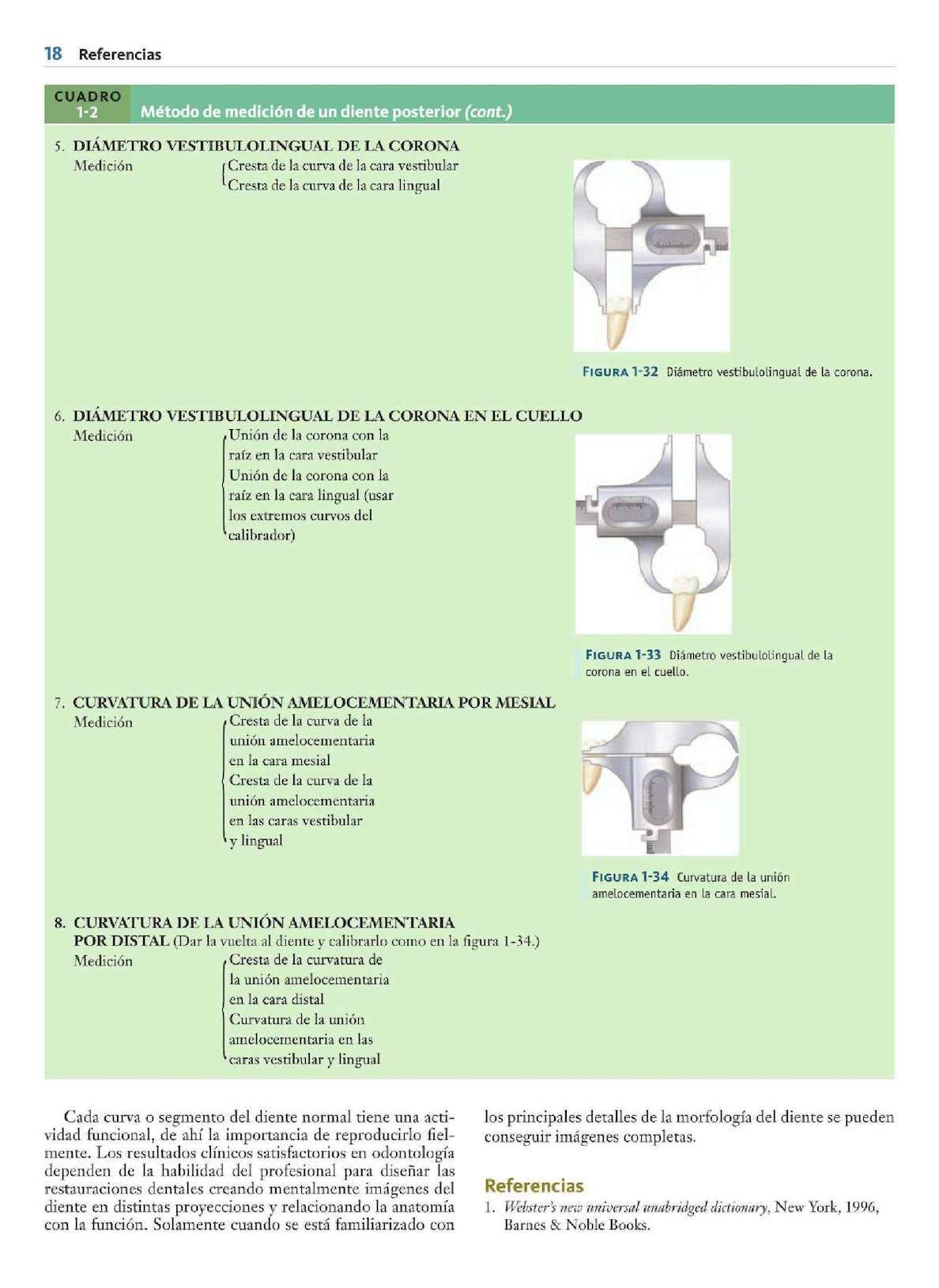 Atractivo La Anatomía Y La Fisiología De Uñas Galería - Ideas de ...
