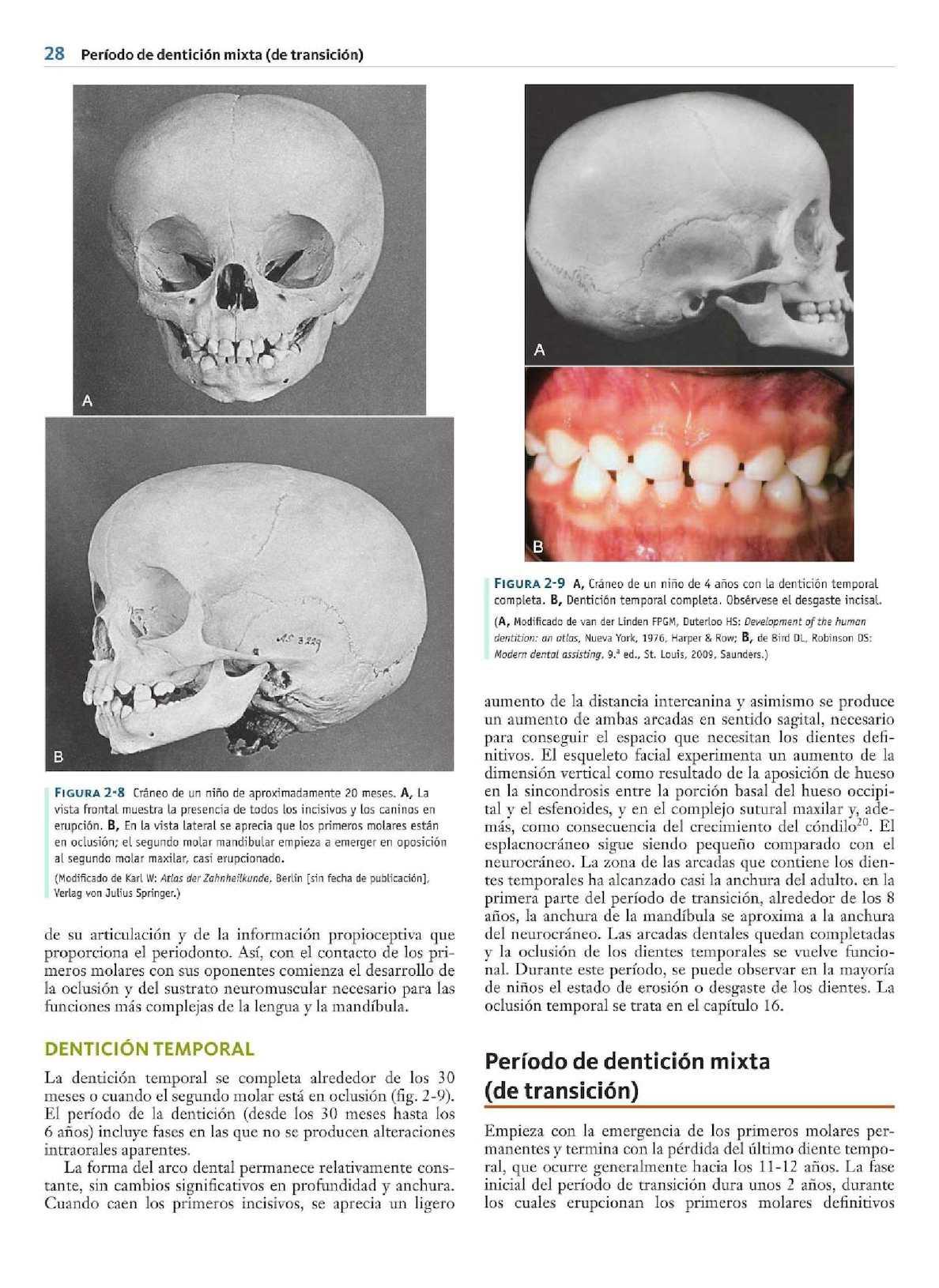Increíble Anatomía Molar Mandibular Ilustración - Imágenes de ...