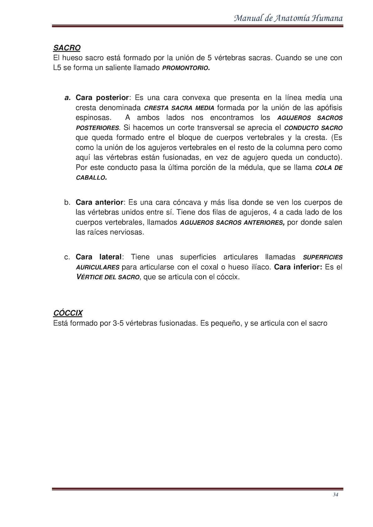 Manual De Anatomia Humana 2015 By Edwin Ambulodegui - CALAMEO Downloader