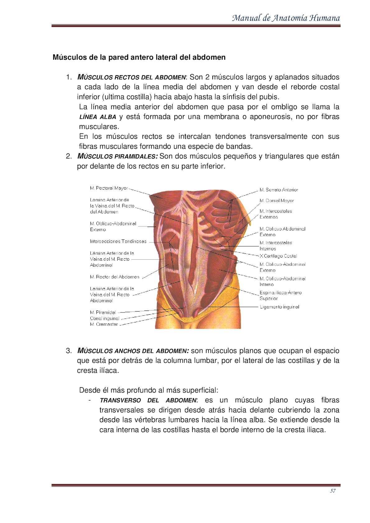 Famoso Anatomía De La Ingle Masculina Componente - Imágenes de ...