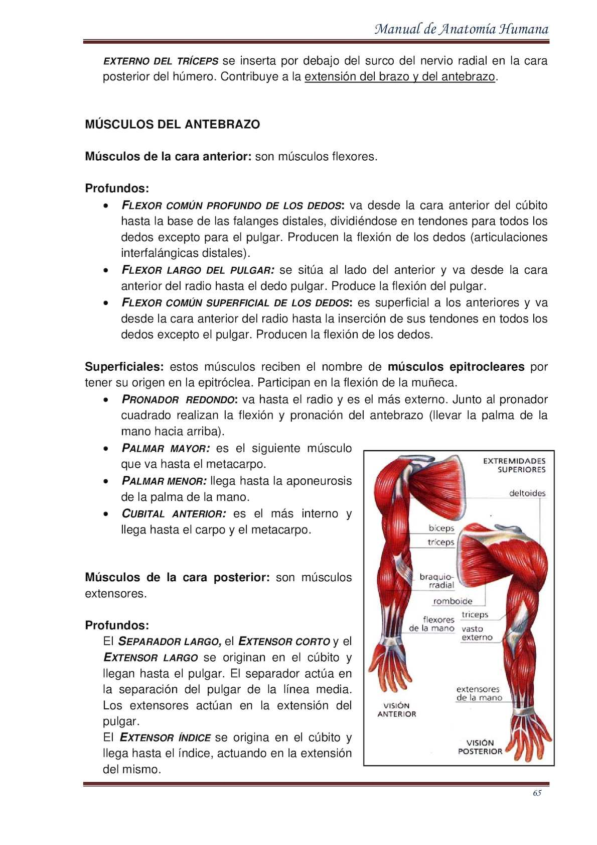 Único Lo Que Es La Extensión De La Anatomía Patrón - Imágenes de ...