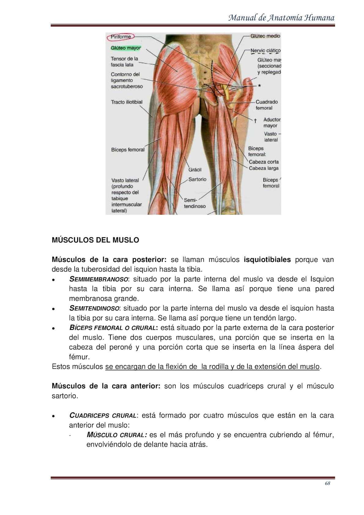 Asombroso Anatomía Saco Dural Imágenes - Anatomía de Las Imágenesdel ...