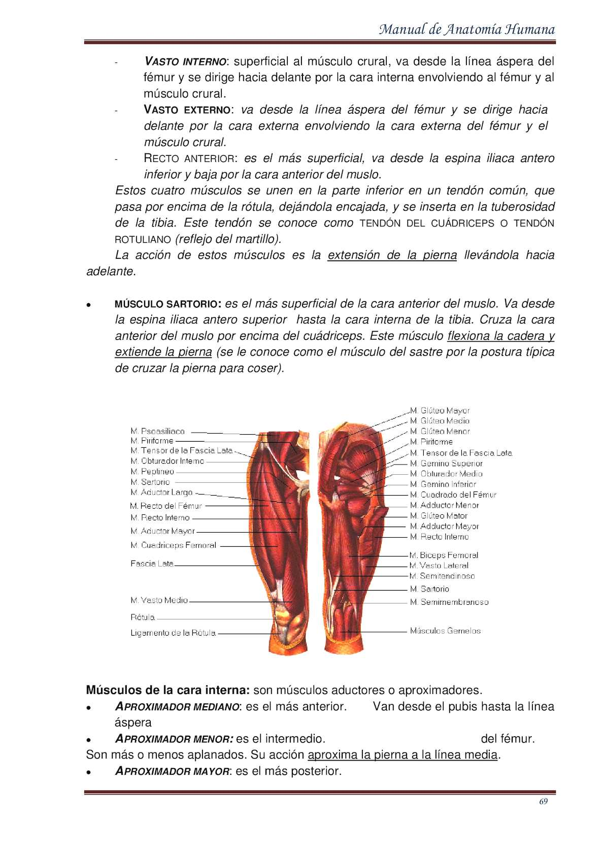 Manual De Anatomia Humana 2015 By Edwin Ambulodegui - CALAMEO Downloader