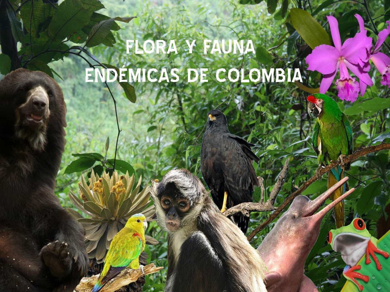 Especies Endémicas de colombia