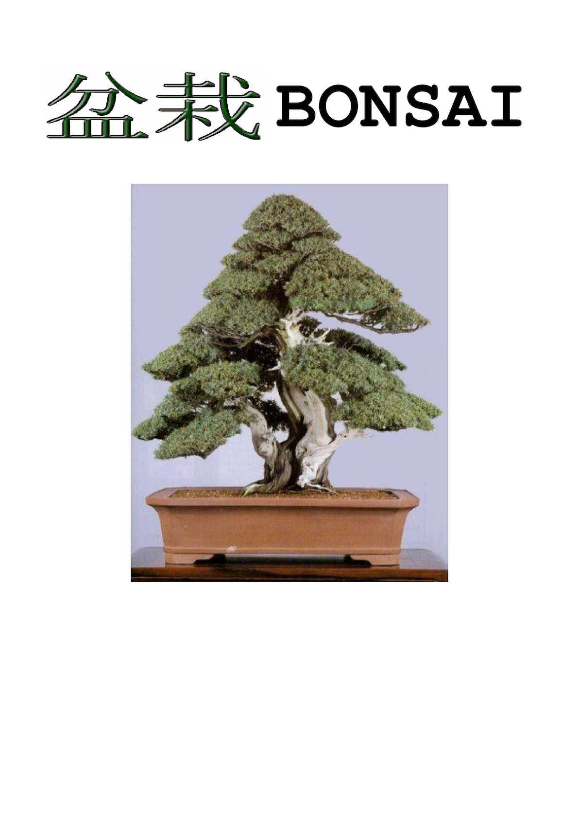 Planta de exterior picea glaica conica 3l verdecora - Bonsai verdecora ...