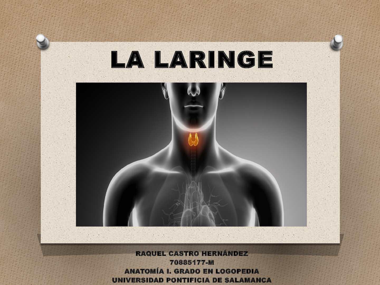 Calaméo - La Laringe