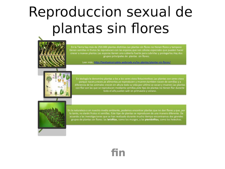 Que plantas se reproducen asexualmente