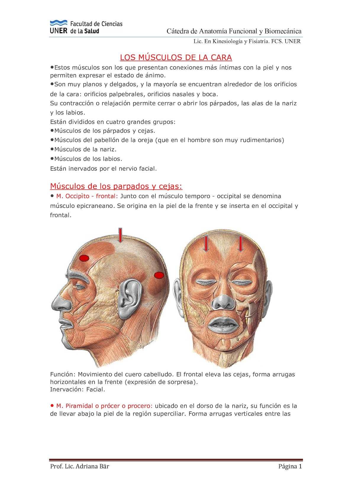 Calaméo - 1517090328 Músculos+de+la+cara+(1)