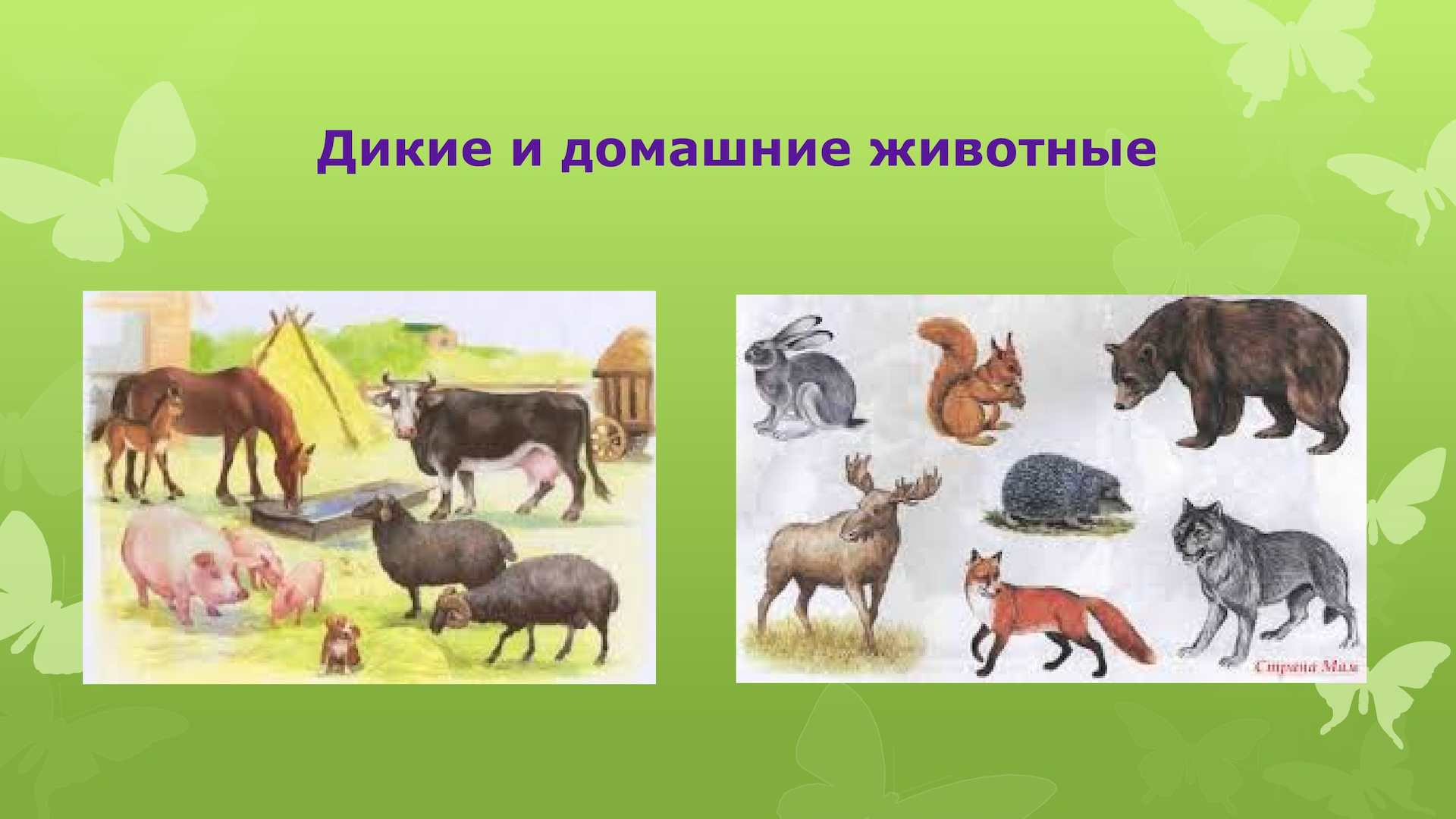 Фото дикие и домашние животные детям