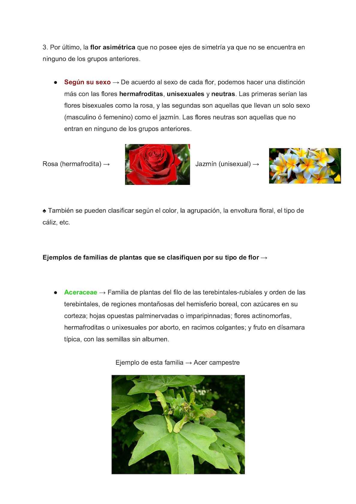 Flores Inflorescencias Frutos Daniel Arias Calameo Downloader