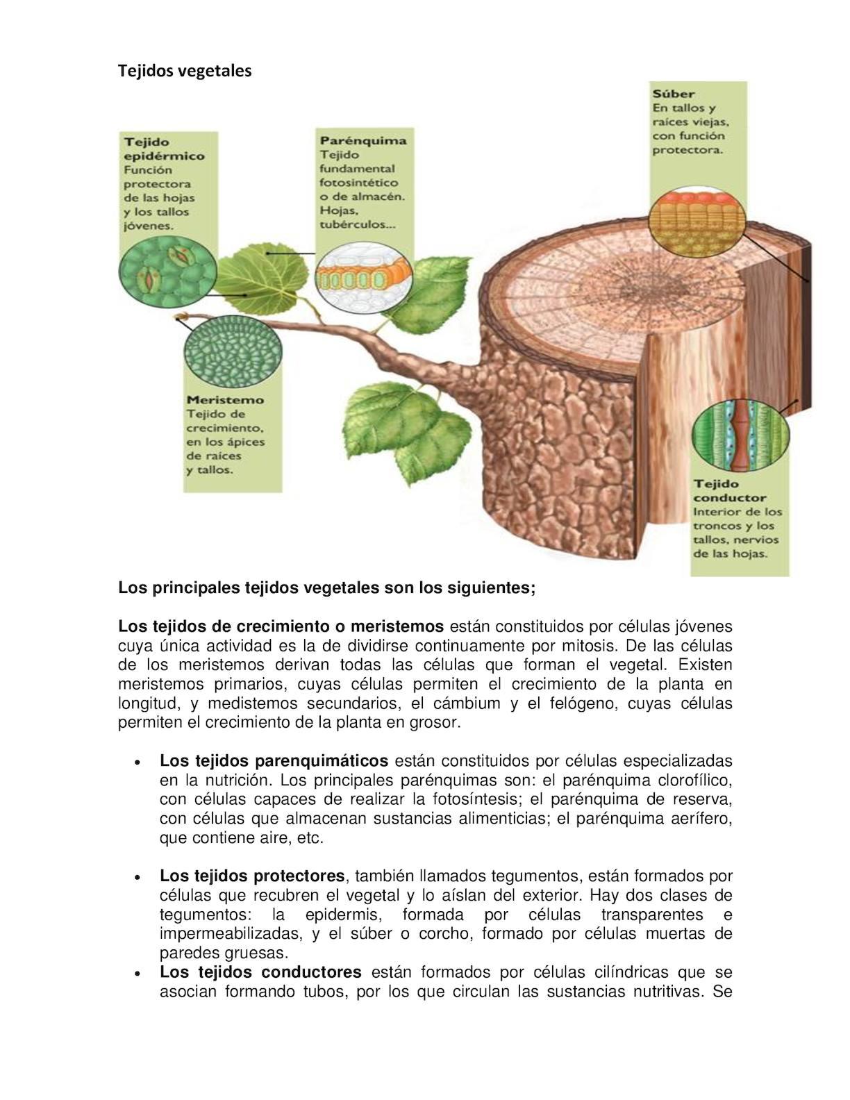 Calam o poster tejidos vegetales y tejidos animales for Como estan formados los suelos