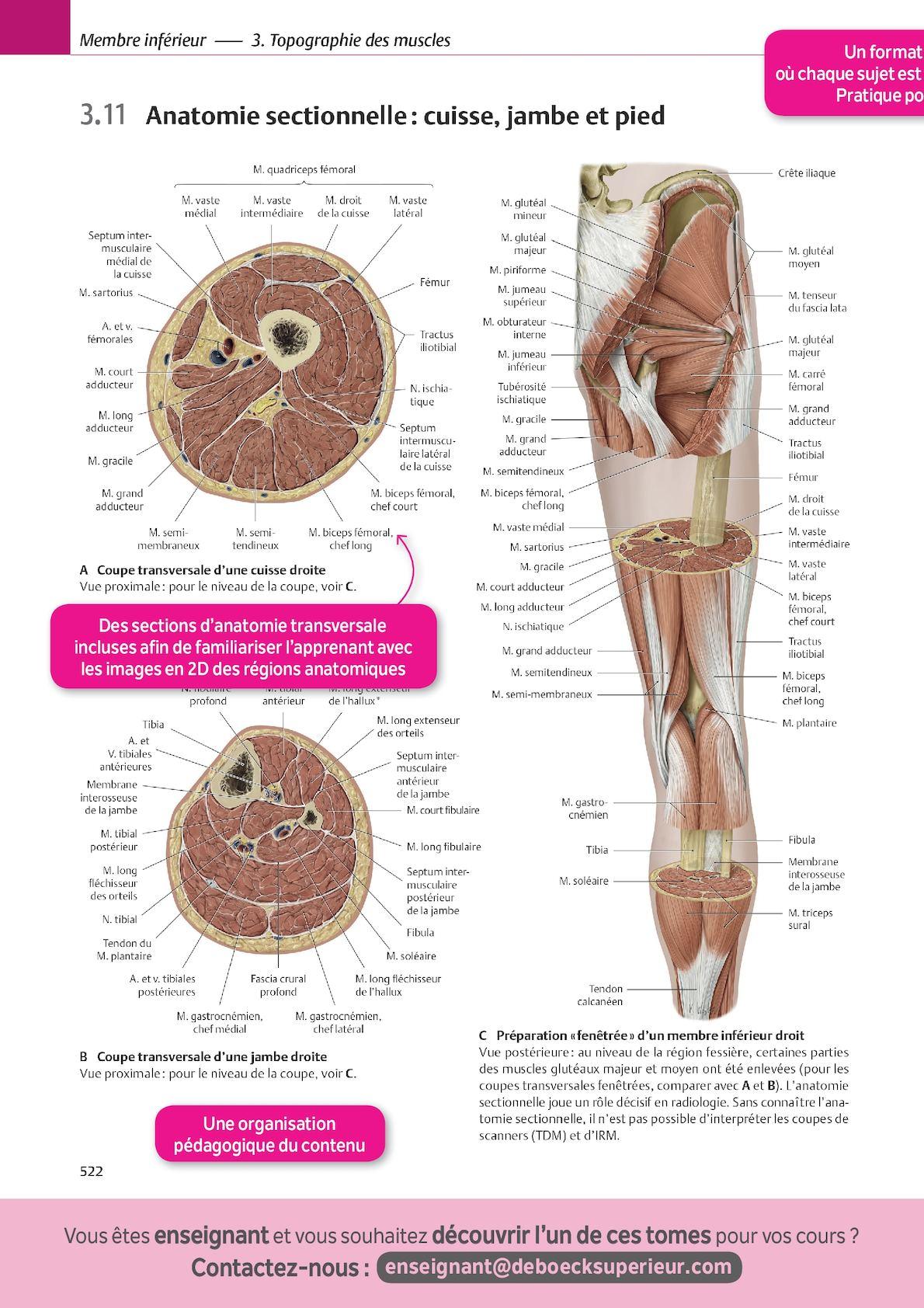 Großartig Kostenlos Anatomieatlas Galerie - Anatomie Ideen - finotti ...