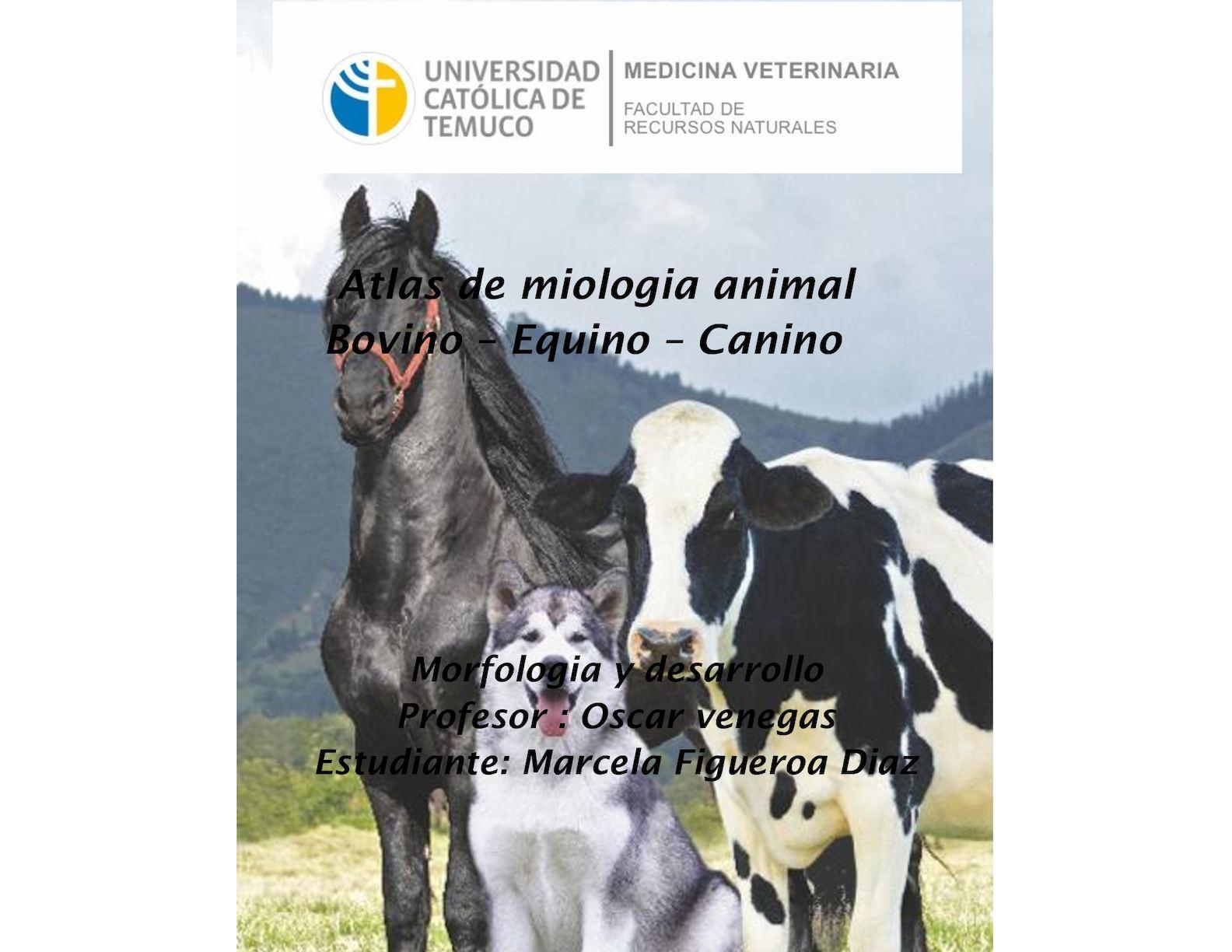 Calaméo - Atlas de Miologia Bovino-Equino-Canino