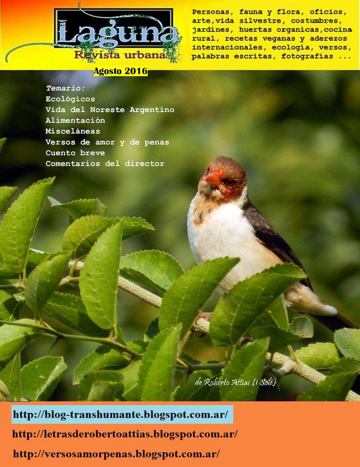 Calaméo - Laguna, Revista Urbana Agosto 2016