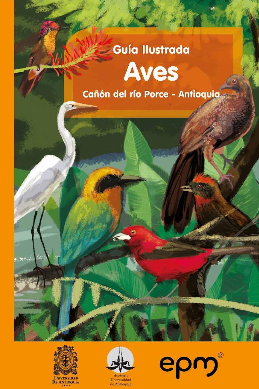 Calaméo - Guia Ilustrada Canon Del Rio Porce Antioquia Aves
