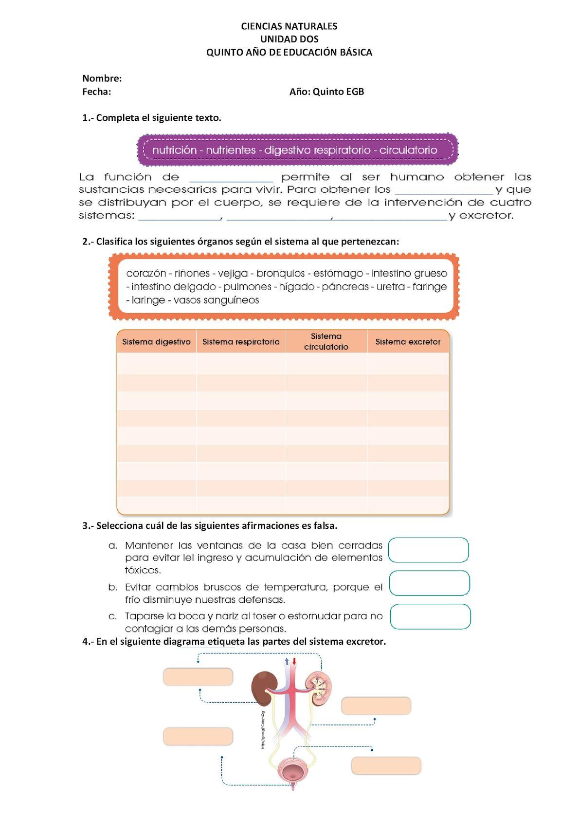 Evaluaciones 5to Cn - CALAMEO Downloader