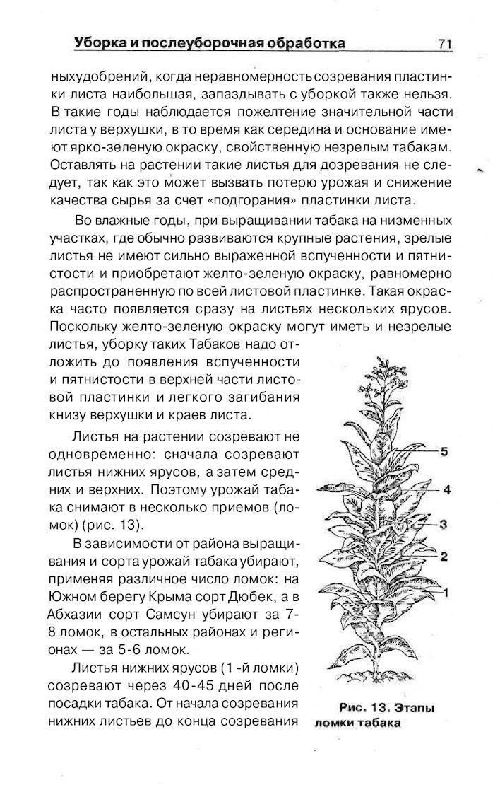 Выращивание табака различных сортов читать 53
