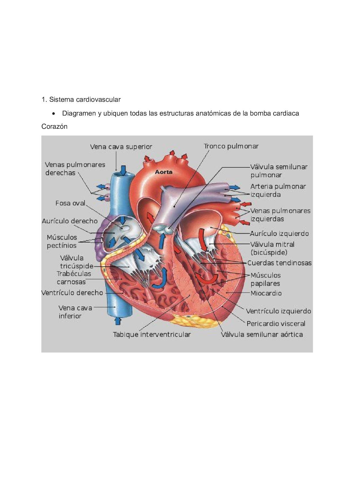Lujo Las Vías Anatómicas Talleres Ornamento - Imágenes de Anatomía ...