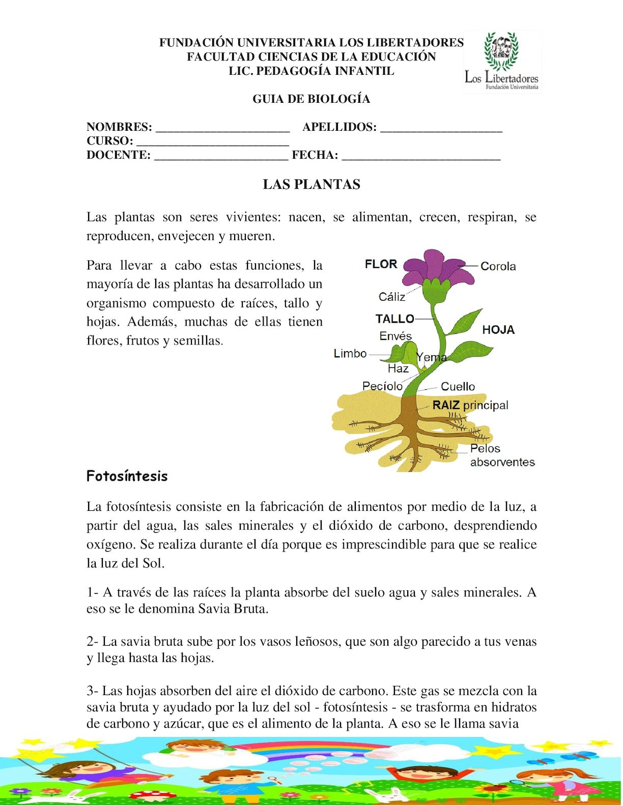 Calaméo - Las Plantas Guia