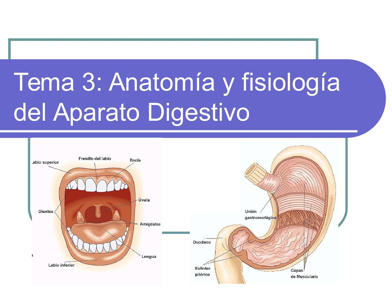 Calaméo - Aparato Digestivo