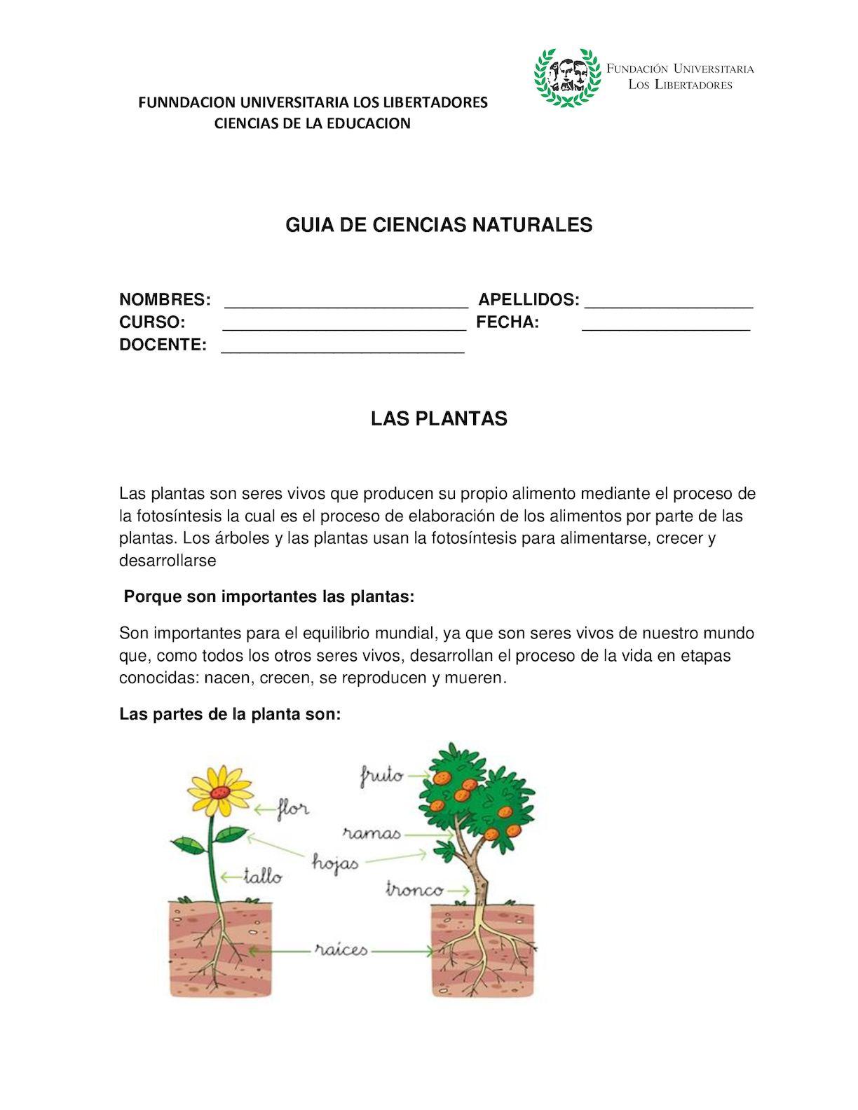 Calaméo - Guia 3 Las Plantas