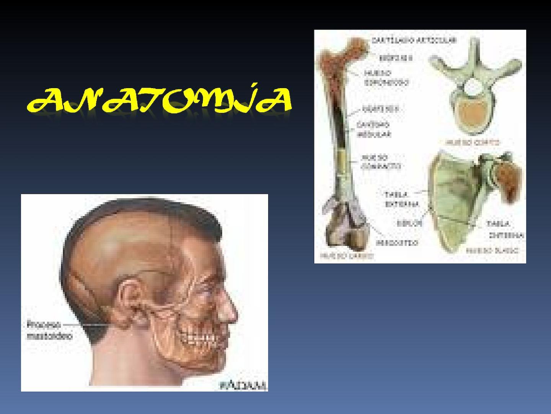 Calaméo - Anatomia