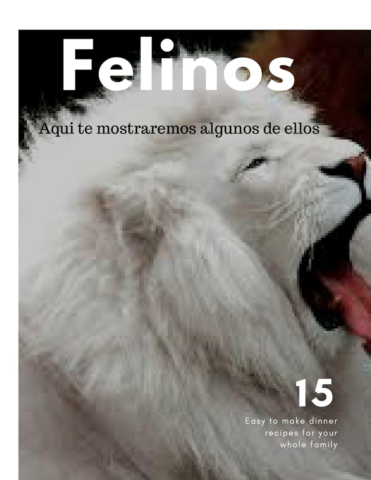 Felinos (1)