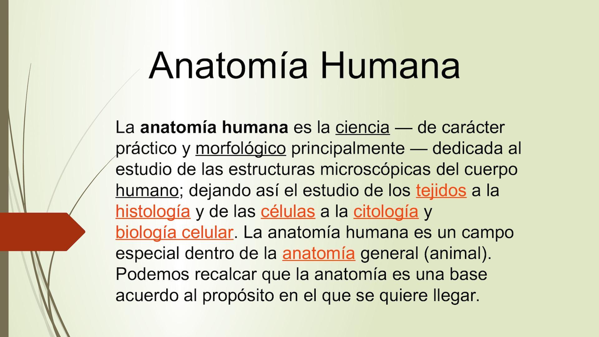 Calaméo - Anatomía Humana
