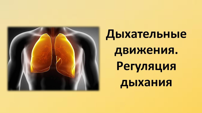 Как происходит гуморальная регуляция дыхания почему благодаря