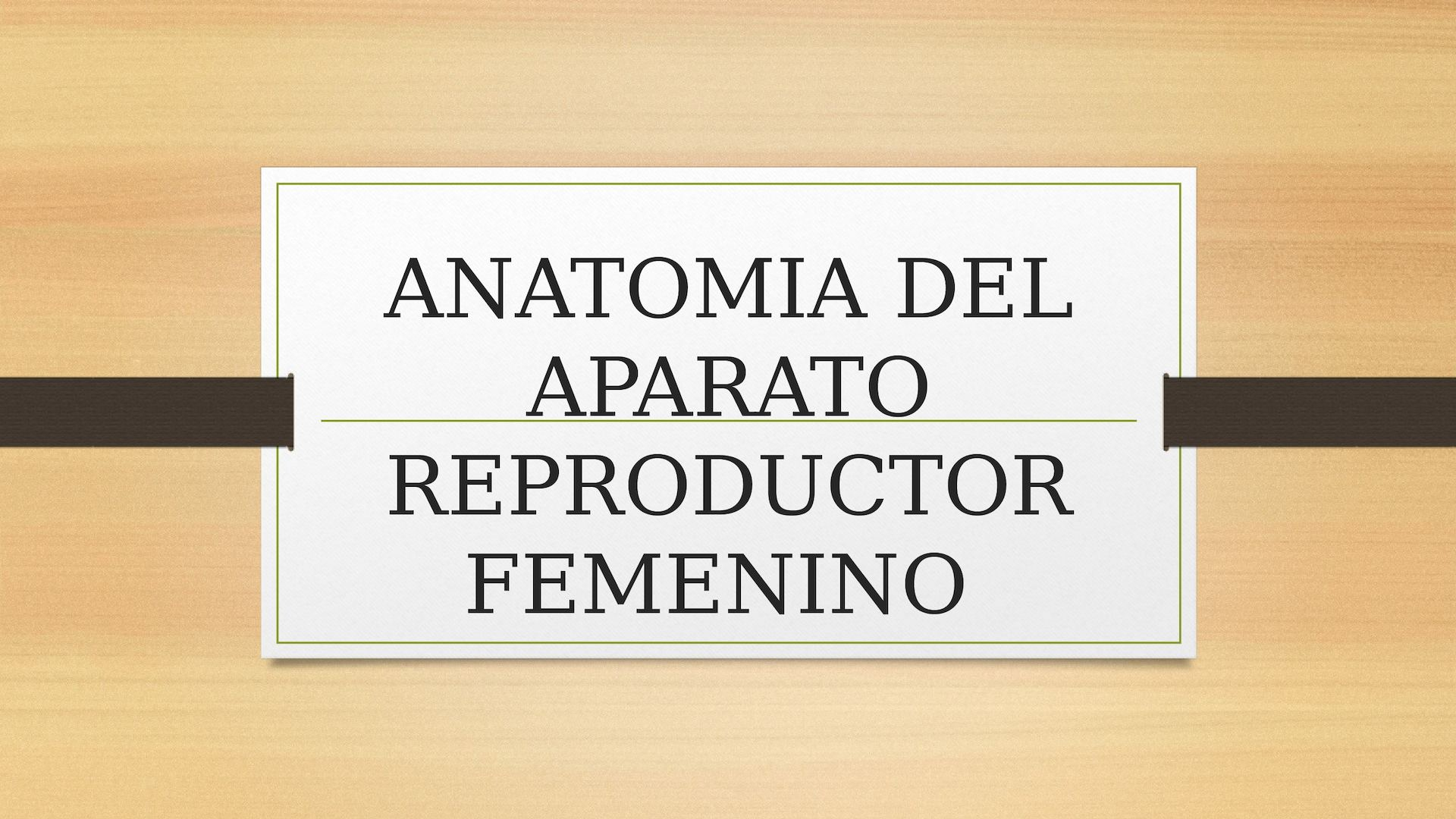 Calaméo - Anatomia Aparato Reproductor Femenino