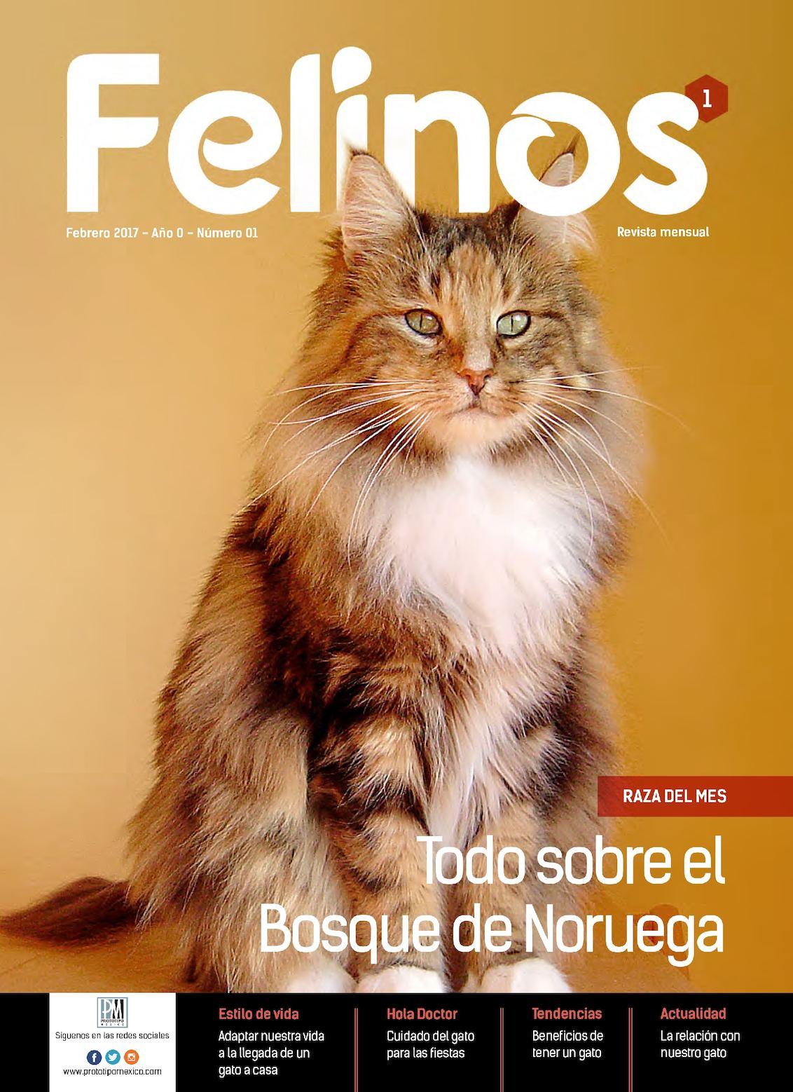 Felinos 01