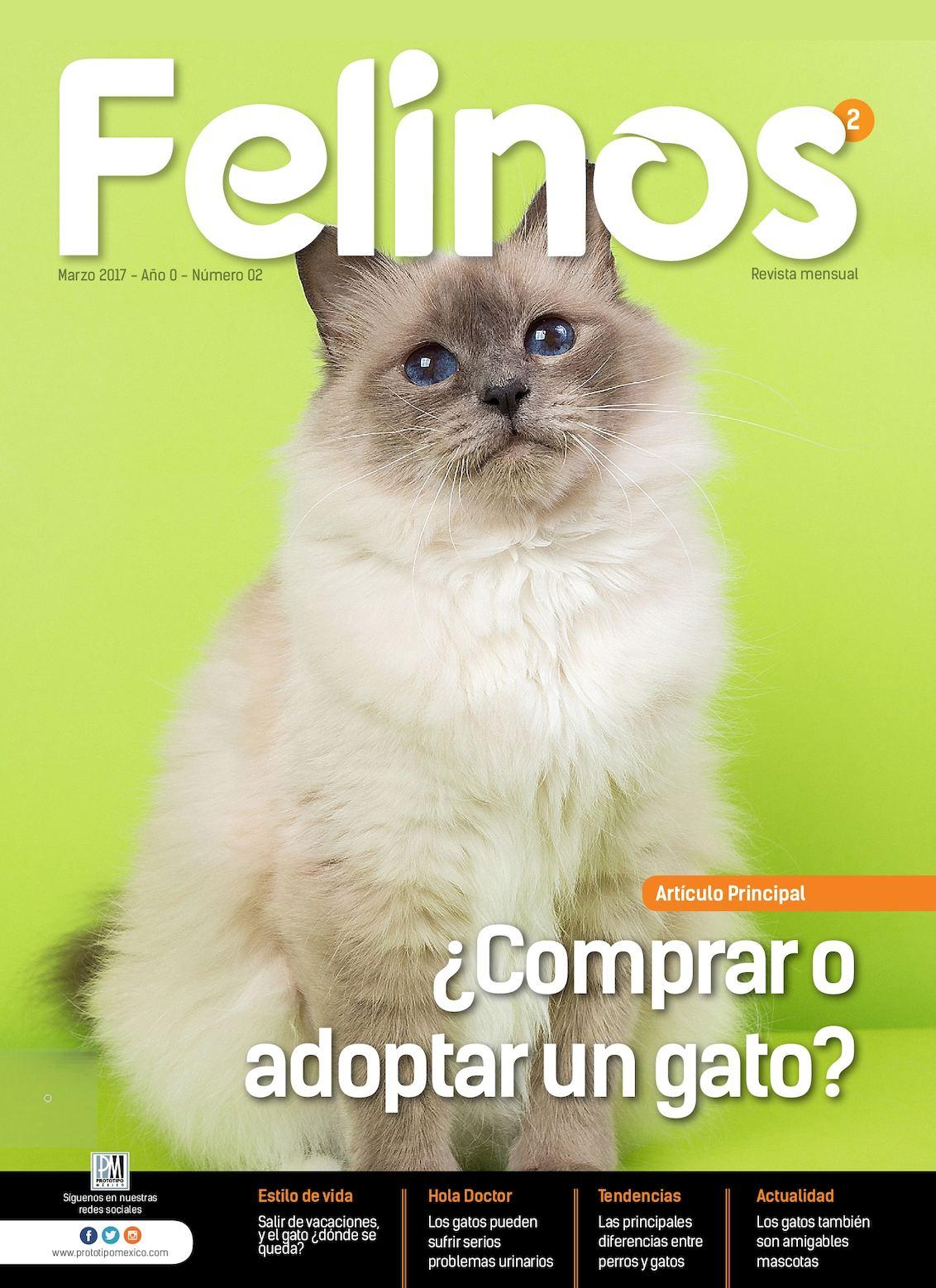 Felinos 02