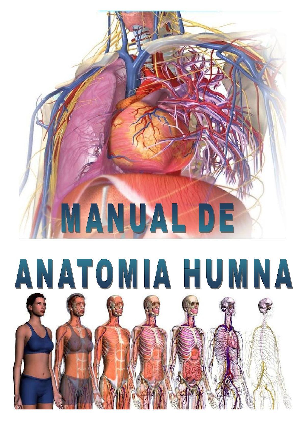Calaméo - Como Se Ve La Anatomia