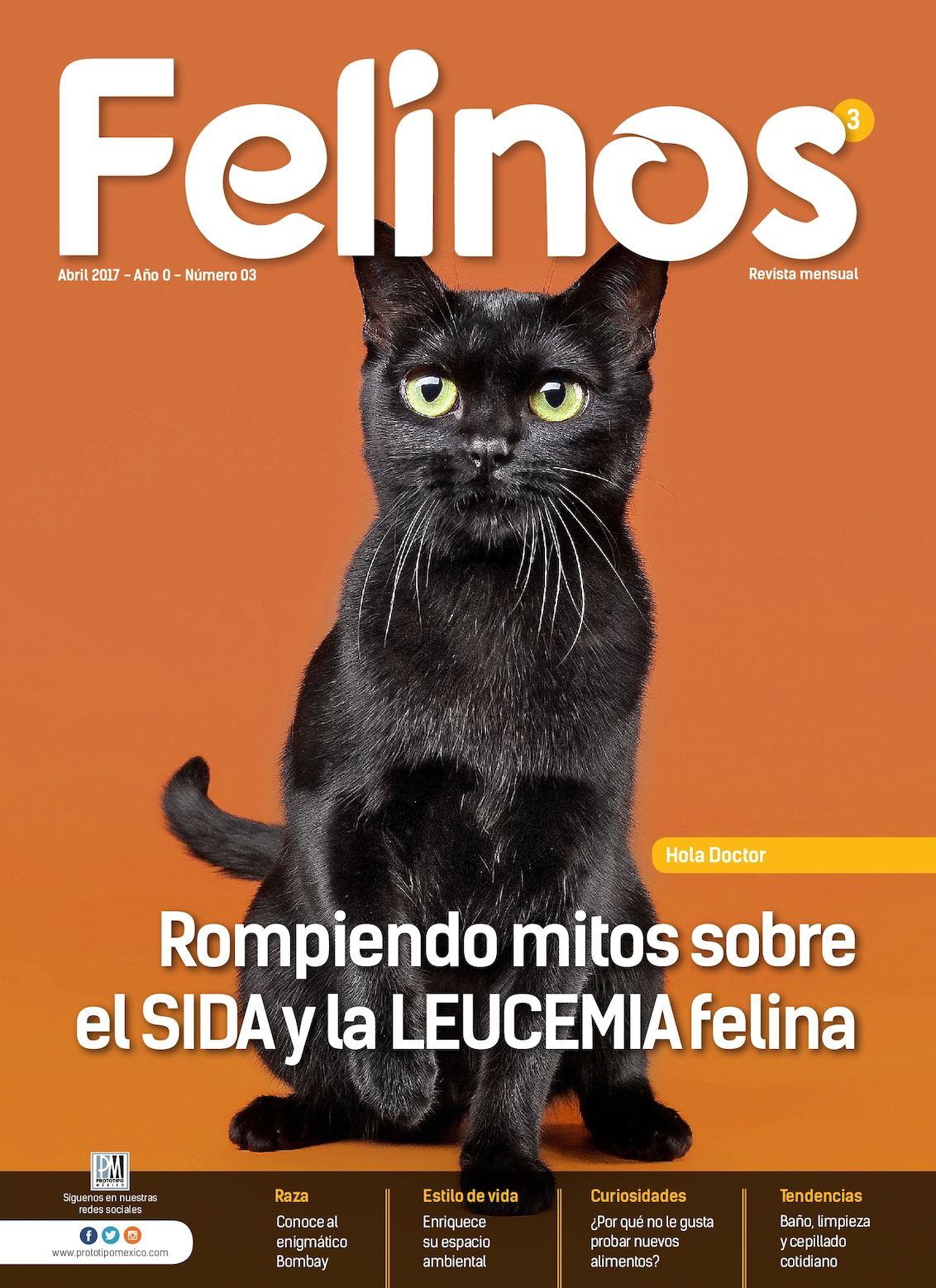 Felinos 03