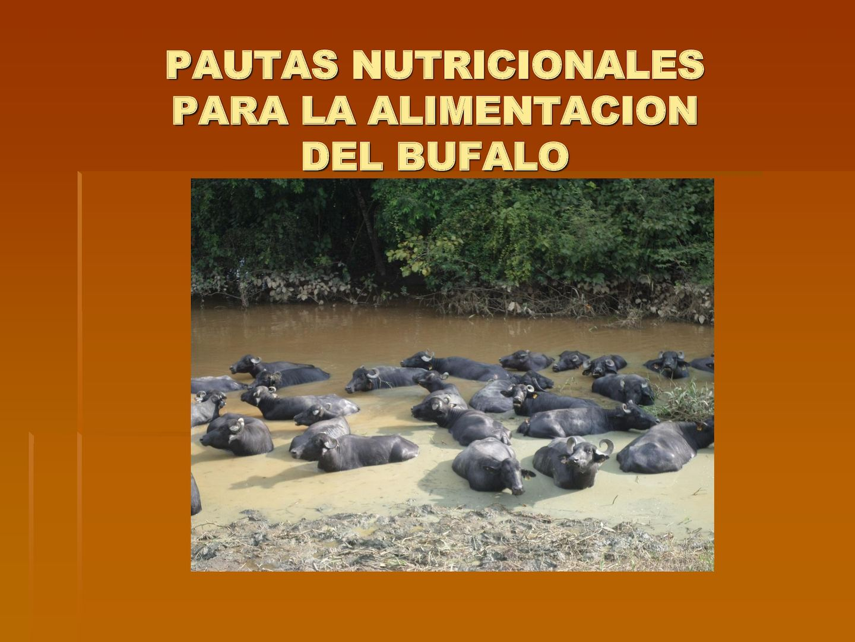 Calaméo - Alimentacion Del Bufalo