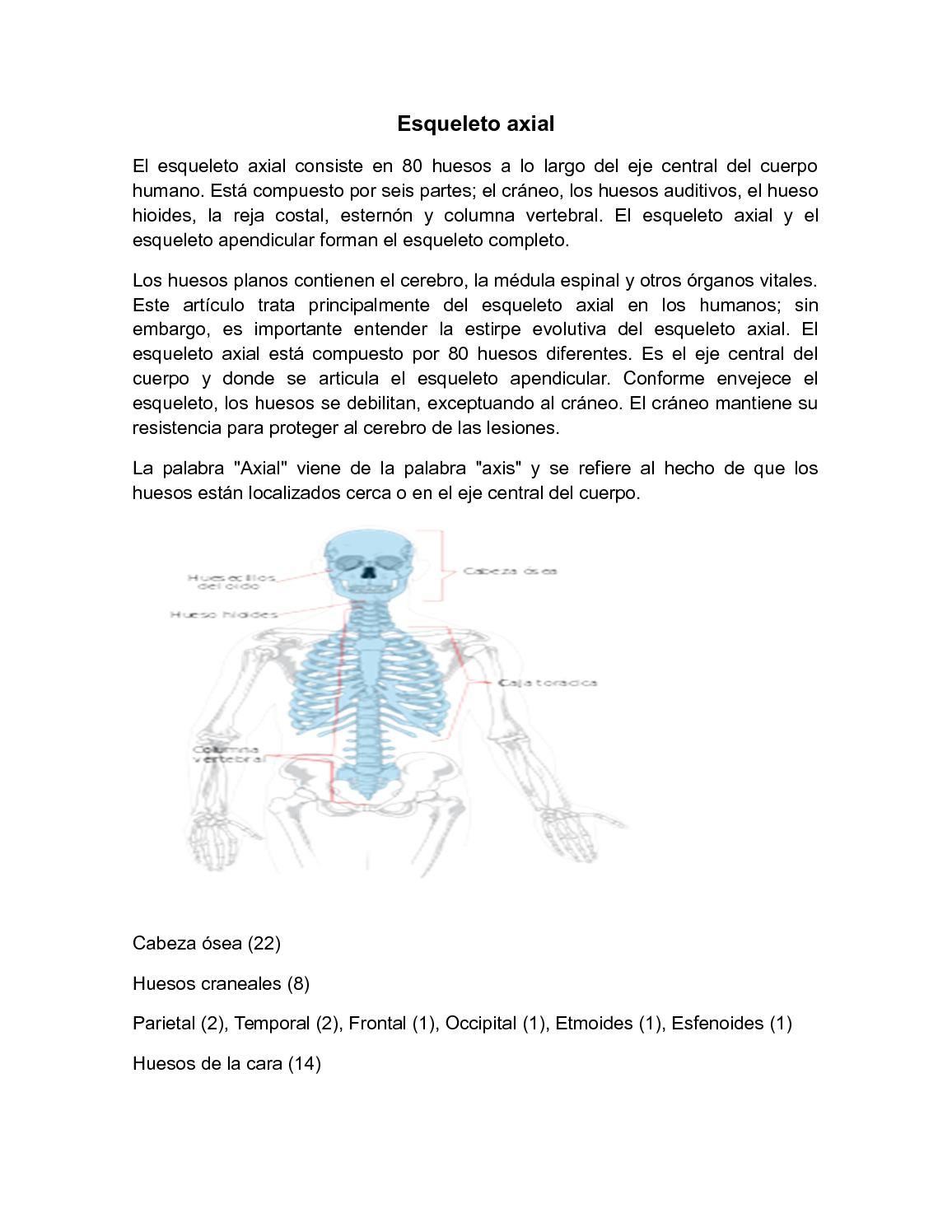 Calaméo - Esqueleto Axial