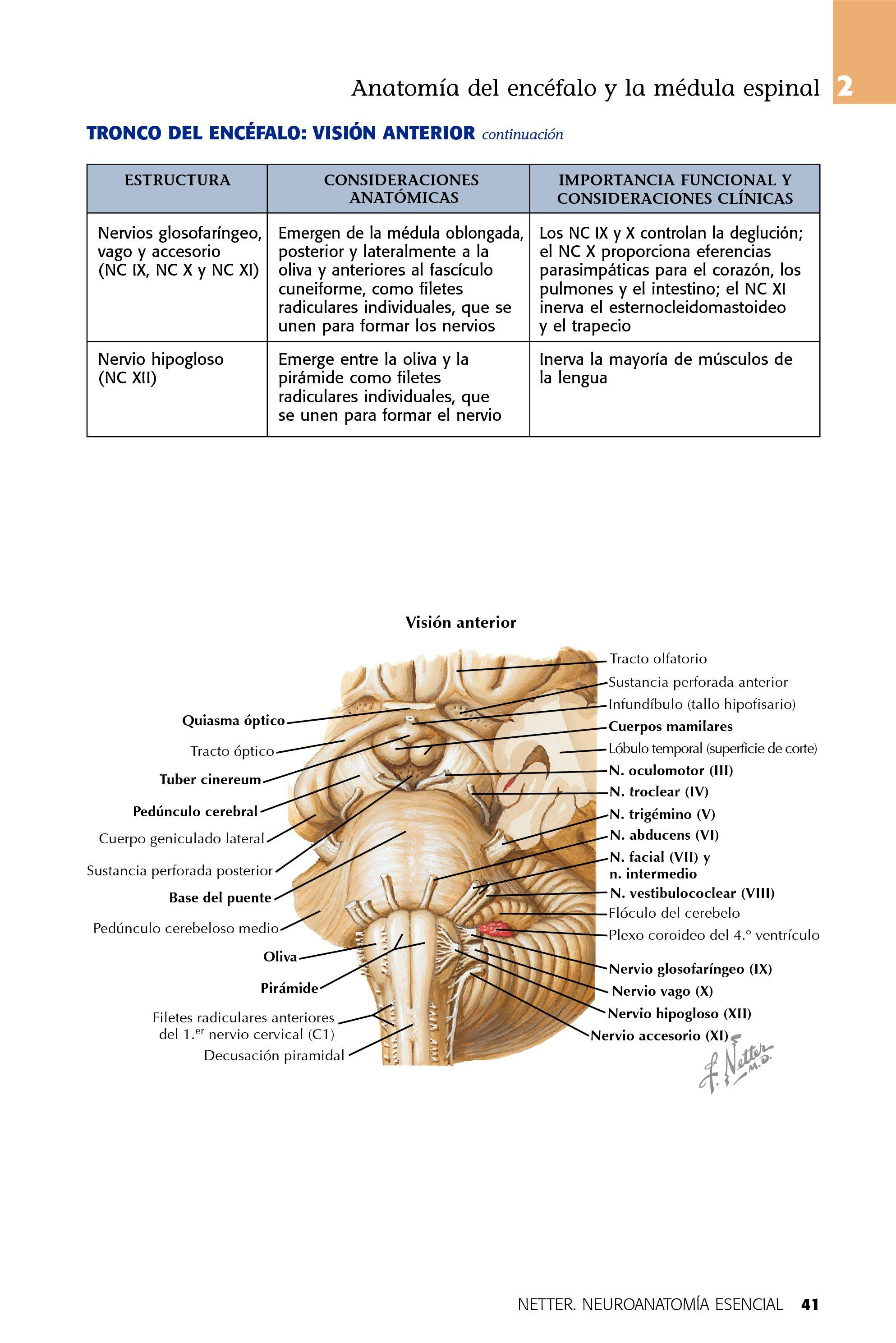 Netter Neuroanatomia Esencial 1° - CALAMEO Downloader