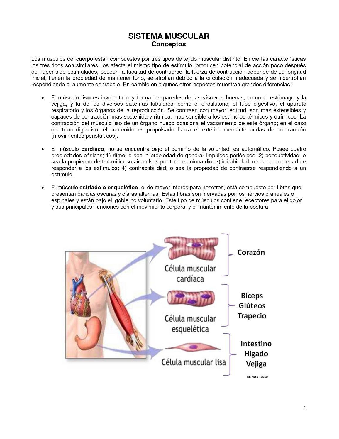 Sistema Muscular - CALAMEO Downloader