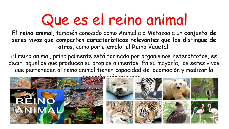 Reino Animalia | www.pixshark.com - Images Galleries With