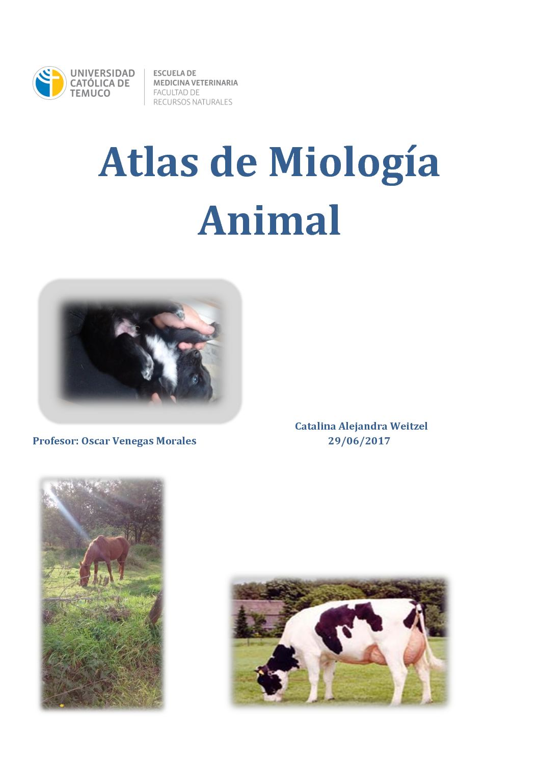 Calaméo - Atlas De Miología Animal