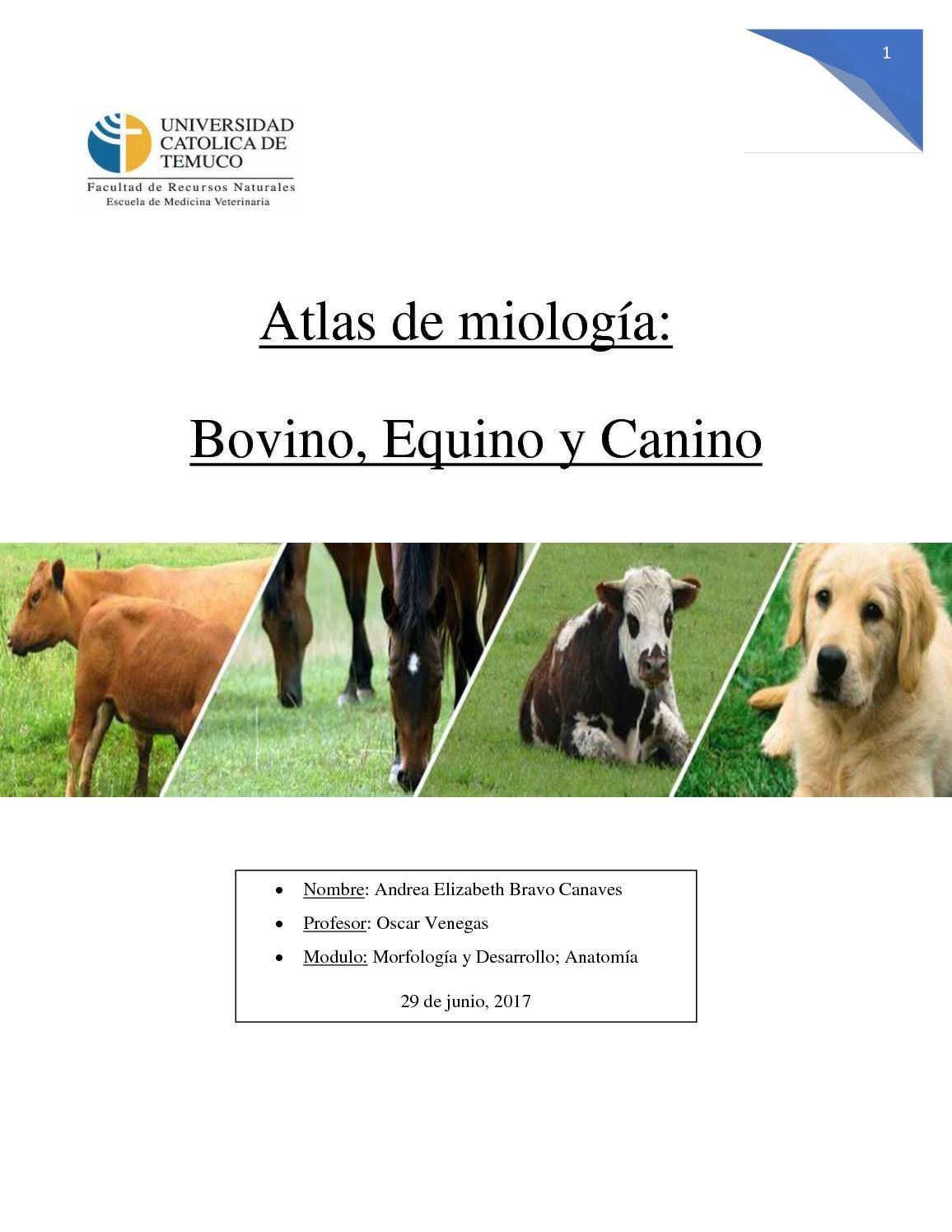 Calaméo - Atlas De Miología Veterinaria