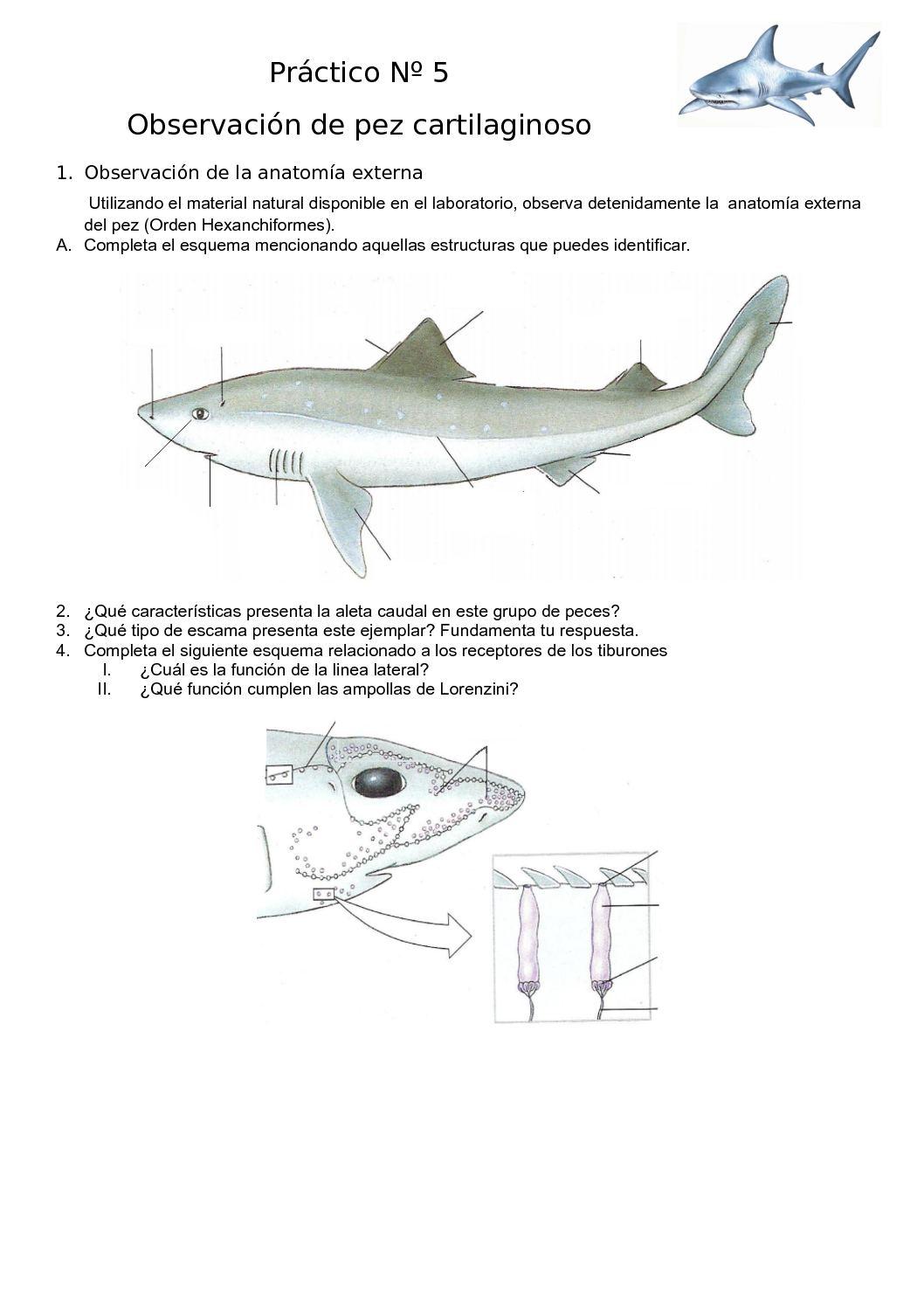 Calaméo - Práctico Nº 5 Clase Condrictios