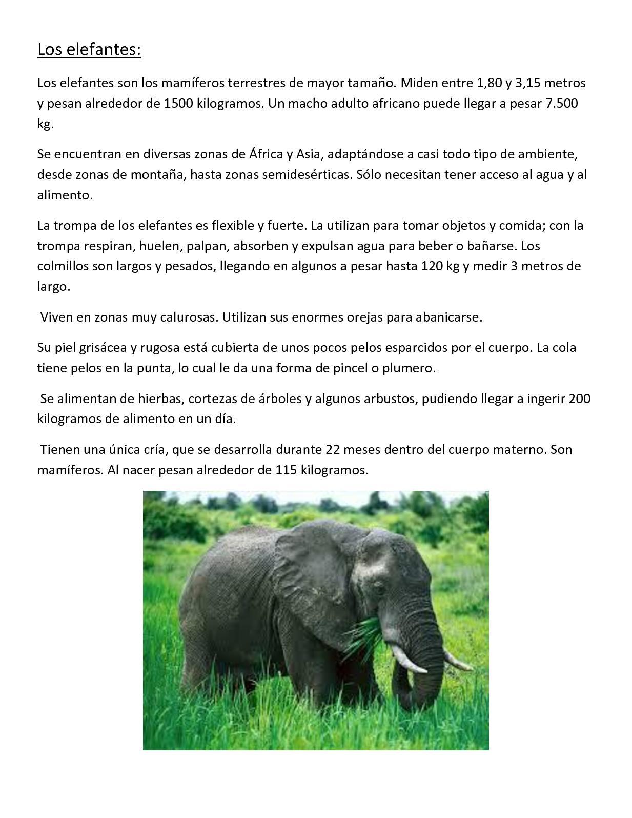 Calam o 4 a ficha t cnica elefante for Objetos para banarse