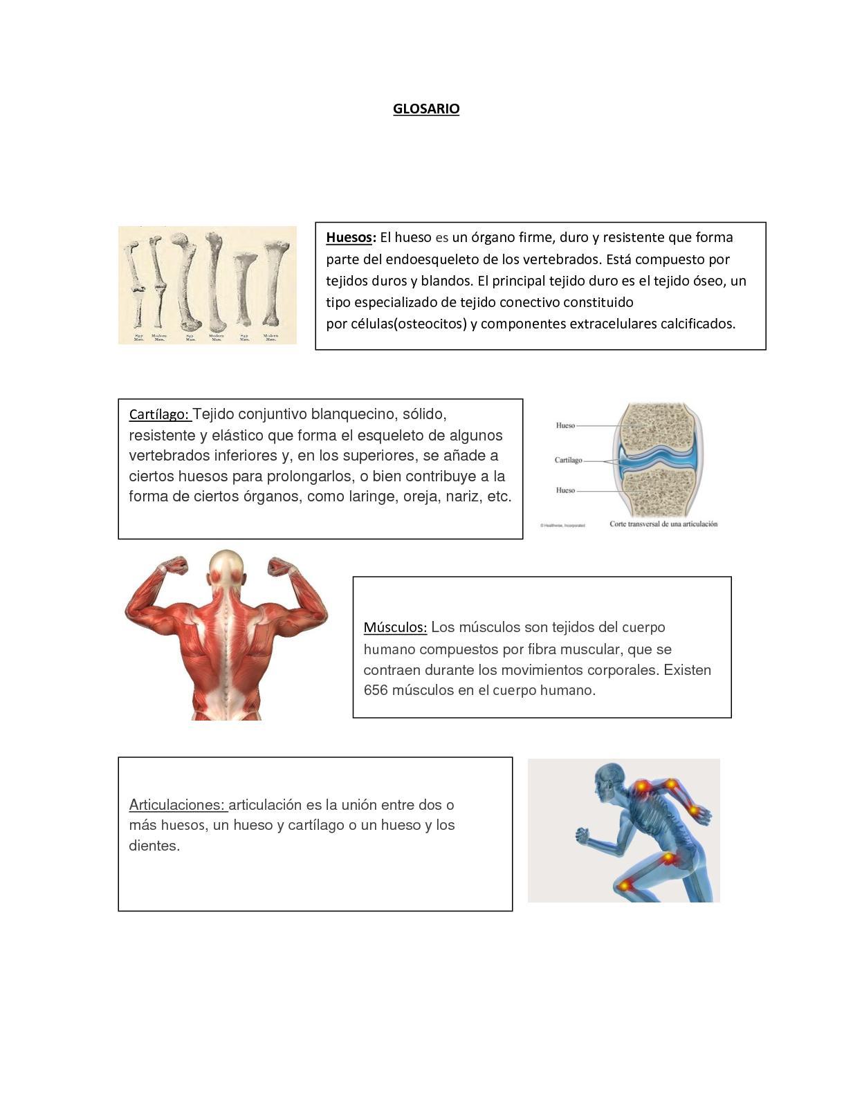 Calaméo - Glosario Sistema Oseo Y Muscular