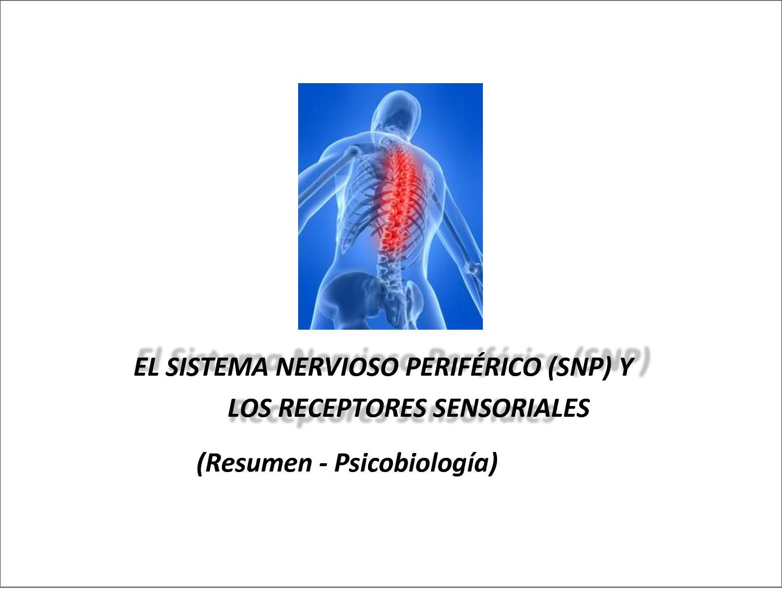 Calaméo - Sistema Nervioso Periferico Y Receptores Pdf